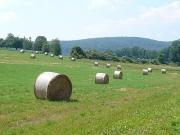 hamm_farm